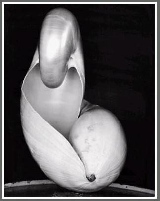weston-shell