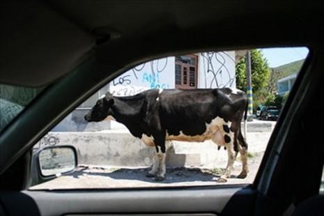 Svet kroz šoferšajbnu taksija