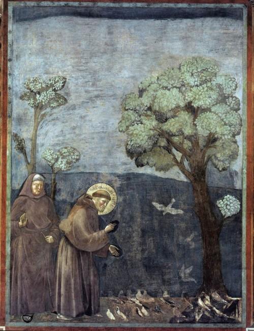 Giotto di Bondone / Djoto /  - Page 2 Legend-of-St-Francis-15.-Sermon-to-the-Birds-500x650