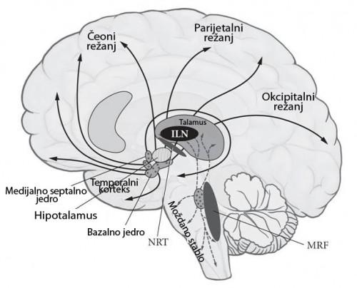 Neuronski korelati svesti