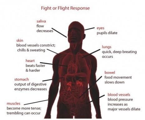 FightOrFlightResponse Black'nRed