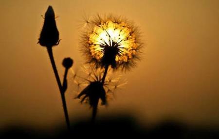 """""""Žuti cvet"""" – Hulio Kortasar"""