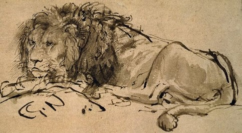 Rembrandt-A-Lion-Lying-Down-extinct-cape-lion-c1650-ink_large