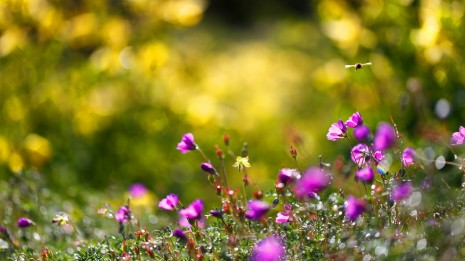 summer-flowers-bees-nature-backgrounds-flowers-summer-25213
