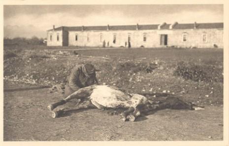 Српски војник једе месо мртвог коња, 1915.