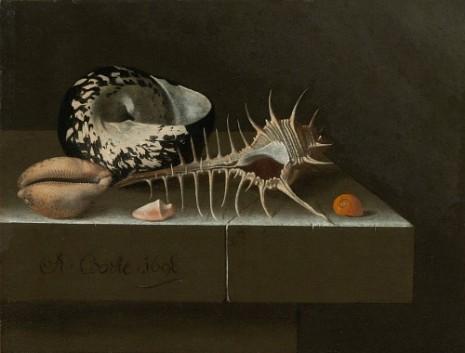 Adriaen Coorte - Still Life with Seashells