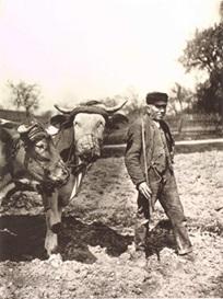Slika 12: Avgust Sander, Seljak obrađuje zemlju, 1928.