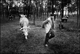 Slika 14: Dragoslav Ilic, Vašar u Plavni, 1990.