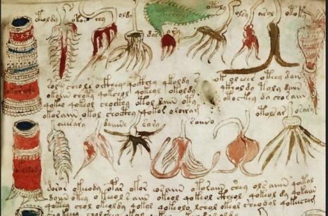 voynichuv-rukopis-napsali-zrejme-aztekove