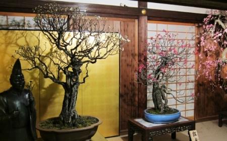 Bonsai: Priča o rađanju patuljastih stabala