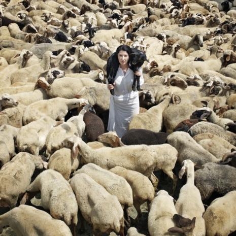 normal_black_sheep