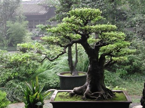 the-best-bonsai-caring-ways