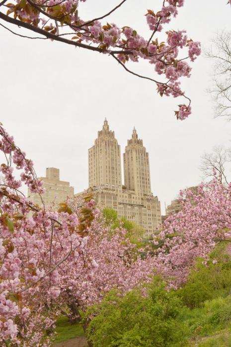 Apstinencija i selo – antivodič kroz Njujork