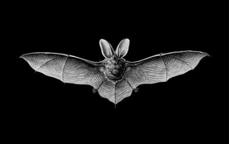 Tomas Nejgel – Kako izgleda biti slepi miš?