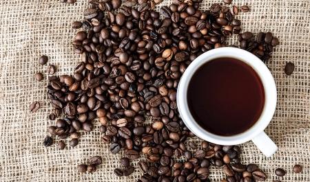 Kafa i mozak