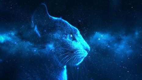 Astrobiološka mačka