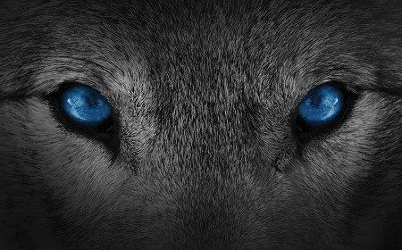 Nepoznati život vuka